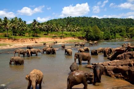 sloní sirotčinec Pinnawala, Srí Lanka
