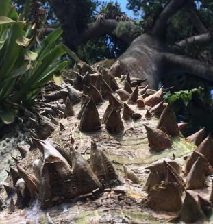 prales v Surinamu, jižní Amerika