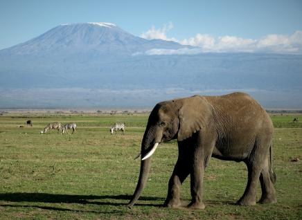 Těšit se můžete na Safari pod vrcholem Kilimandžára
