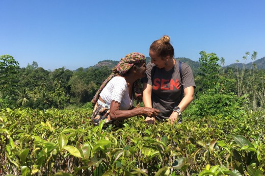 Natrháte si pravý cejlonský čaj