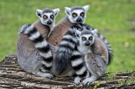 Afrika - ostrov Madagaskar